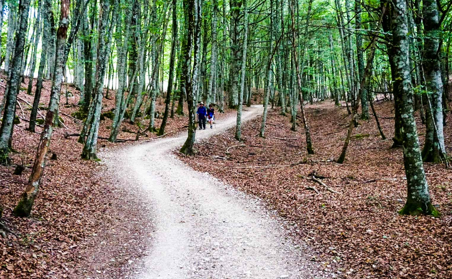 Two people walking through woods along the Camino De Santiago.