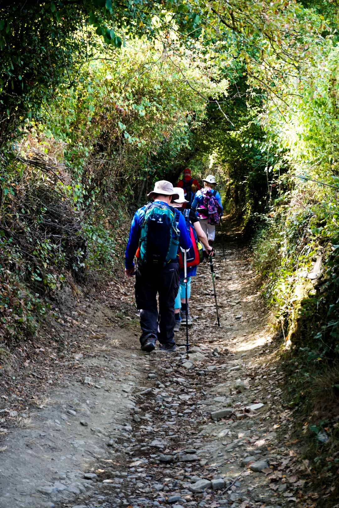 A line of people walking along a path on the Camino de Santiago.