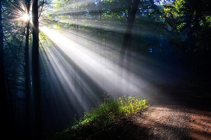 Sun light shining through trees in a forest.