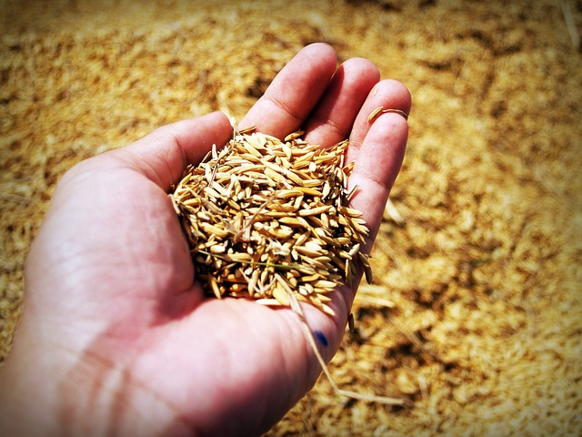 A hand with seed.