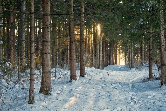 Snow in a forest.